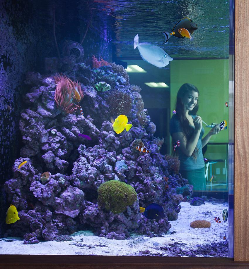 my aquarium essay